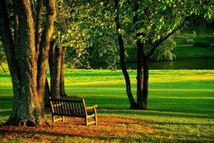 meadowlark, park, bench